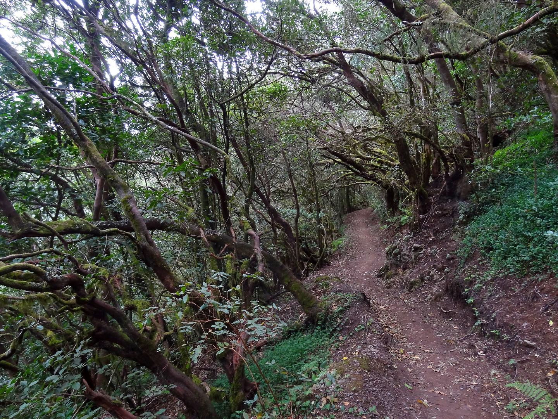 hermigua-trail2.jpg