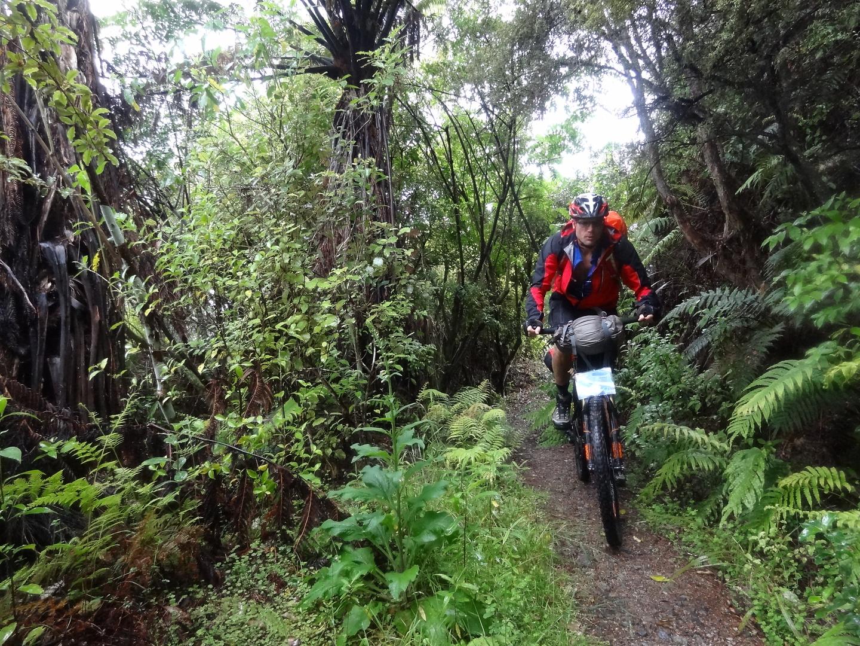 hunua-trail1.jpg
