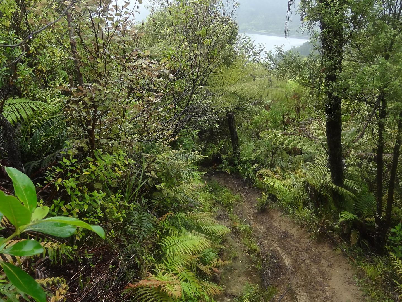 hunua-trail4.jpg