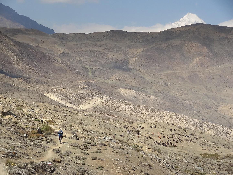lupra-trail1.jpg