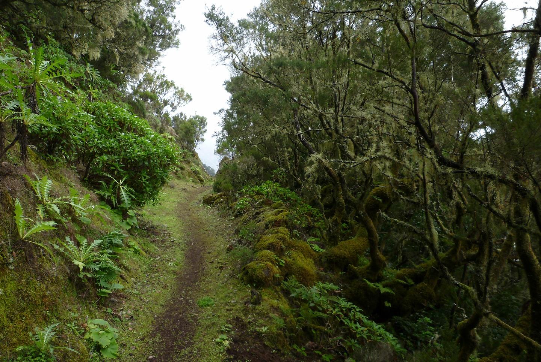 jimana-trail12.jpg