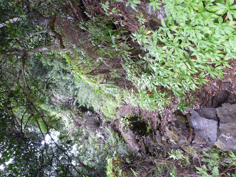 jimana-trail16.jpg