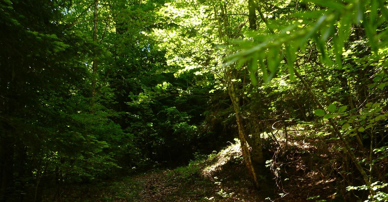 monjoie-trail5.jpg
