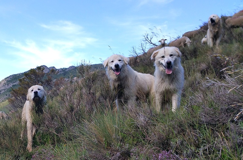 colcine-dogs.jpg
