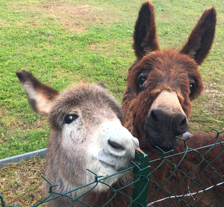 provencix-donkeys.jpg